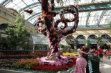 Bellagio Hotel Wedding Botanic Garden Las Vegas