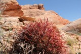Valley of Fire cactus